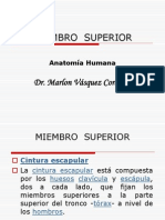2. Anatomia m. Superior