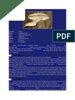 Klasifikasi Jamur tiram.doc