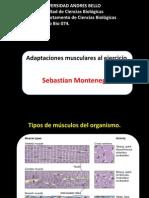 Adaptaciones Musculares Al Ejercicio 2014
