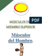 musculosmiembrosuperiorani-120607221132-phpapp02