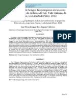 Aislamiento de hongos fitopatógenos en lesiones (1)