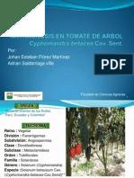 Antracnosis en Tomate de Arbol