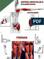 Muscular Inferior