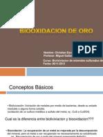 Biooxidacion de Oro - Christian Escobar