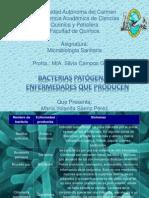 Bacterias Patogenas y Enfermedades