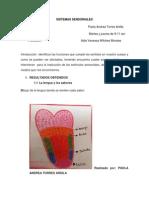 SISTEMAS SENSORIALES.docx