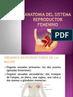 Anatomia Del Sistema Reproductor Femenino
