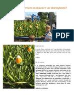 New flax species Phormium cookianum var disneylandii
