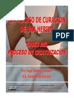 Proceso de Curacion-FASES