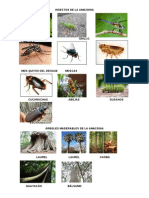 Insectos de La Amazonia