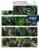 137 Choco-Araceae v1.2