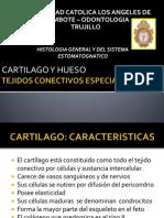 Tejidos Conectivos Especializados (1)