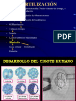 ENDOCRINOLOGIA FETOPLACENTARIO