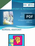 CT Head Anatomy & Pathology