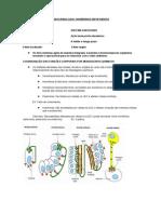 Endocrinologia Parte 01
