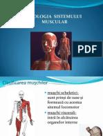 Fiziologia Sistemului Muscular