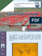 Cultivo Tilapia