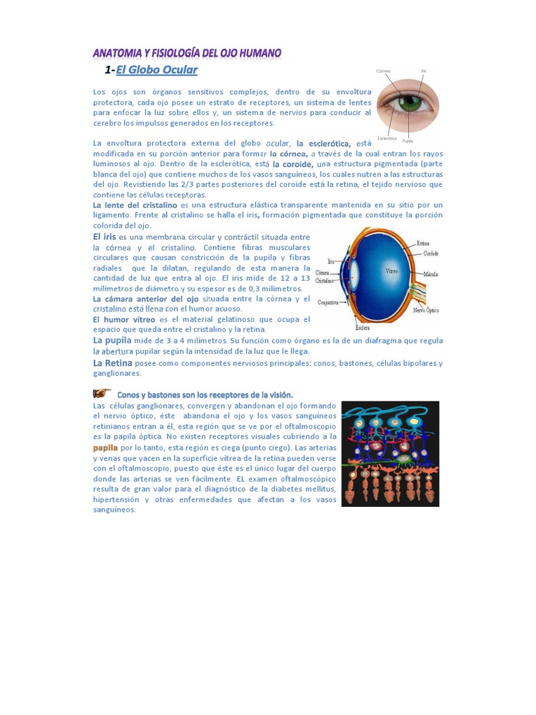 106786140.Clase 2 - Anatomia y Fisiología Del Ojo Humano