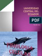 Fisilogia Celular