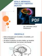 Encefalo, Meninges, Ventrículos y Nervios Craneales