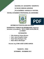 Informe de Fitopatologia Aplicada Del Cultivo de Aji Escabeche