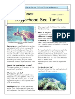 Kids Times Turtle Loggerhead