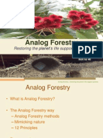 Analog Forestry Project