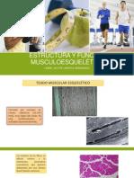 Estructura y Función Musculoesquelética