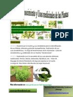Apuntes Del Taller de Reconocimiento y Usos Medicinales de Las Plantas