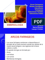 embriologia-120831150756-phpapp02
