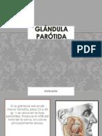 Gland Ula Parotid A