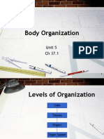 Body Organization