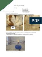 Informe de Practica 1