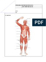 Lap Anatomi Otot 3