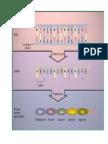 1129. Transcripcion, Procesamiento, Estabilidad, Localizacion y Regulacion de La Sintesis de Proteinas en Todos Sus Niveles