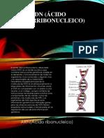 Tema ADN.pptx