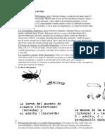 Investigacion Tipos de Suelo, De Riego, Plagas y Abonos