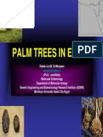 Palms in Egypt-Rabab