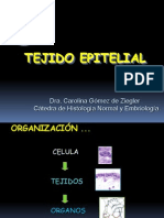 tejido-epitelial