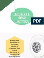 Metabolismo de Lactosa