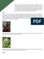 Flora and Fauna.docx