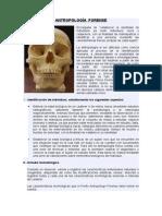 trptico Antropología Forense