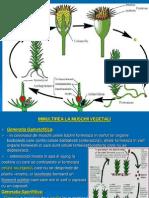 Clasif. Plant. II