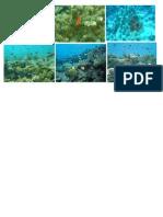 Arrecifes de Centroamerica