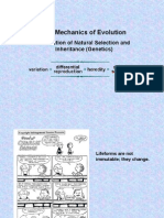 The Mechanics of Evolution