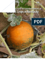 An IPM Scouting Guide for Common Problems of Cucurbit Crops in Kentucky