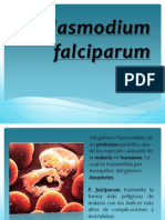 Diapositiva Zoologia I