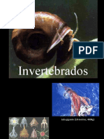 Invertebrados - ensino fundamental