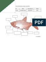 Tuliskan Nama Bahagian Luar Ikan Berdasarkan Jawapan Yang Diberi