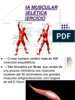 11.Fisiologia Muscular Esquelética